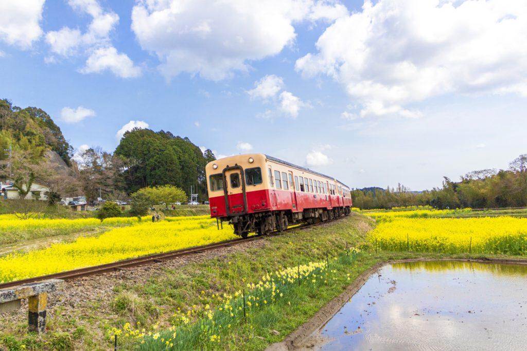 菜の花といすみ鉄道