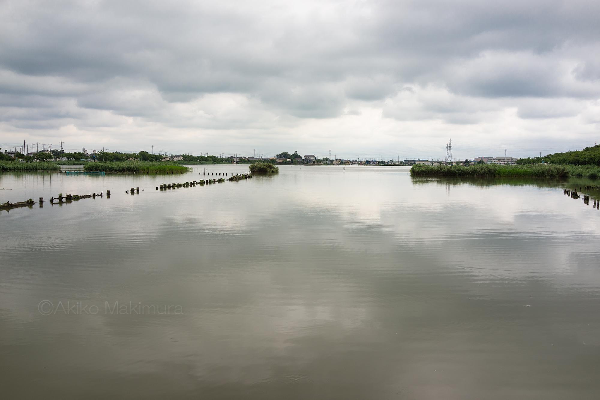 【後編】沼に咲く古代蓮、水中の不思議