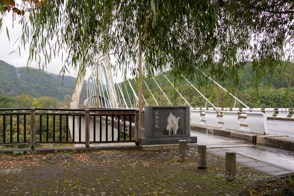尾瀬大橋と水芭蕉