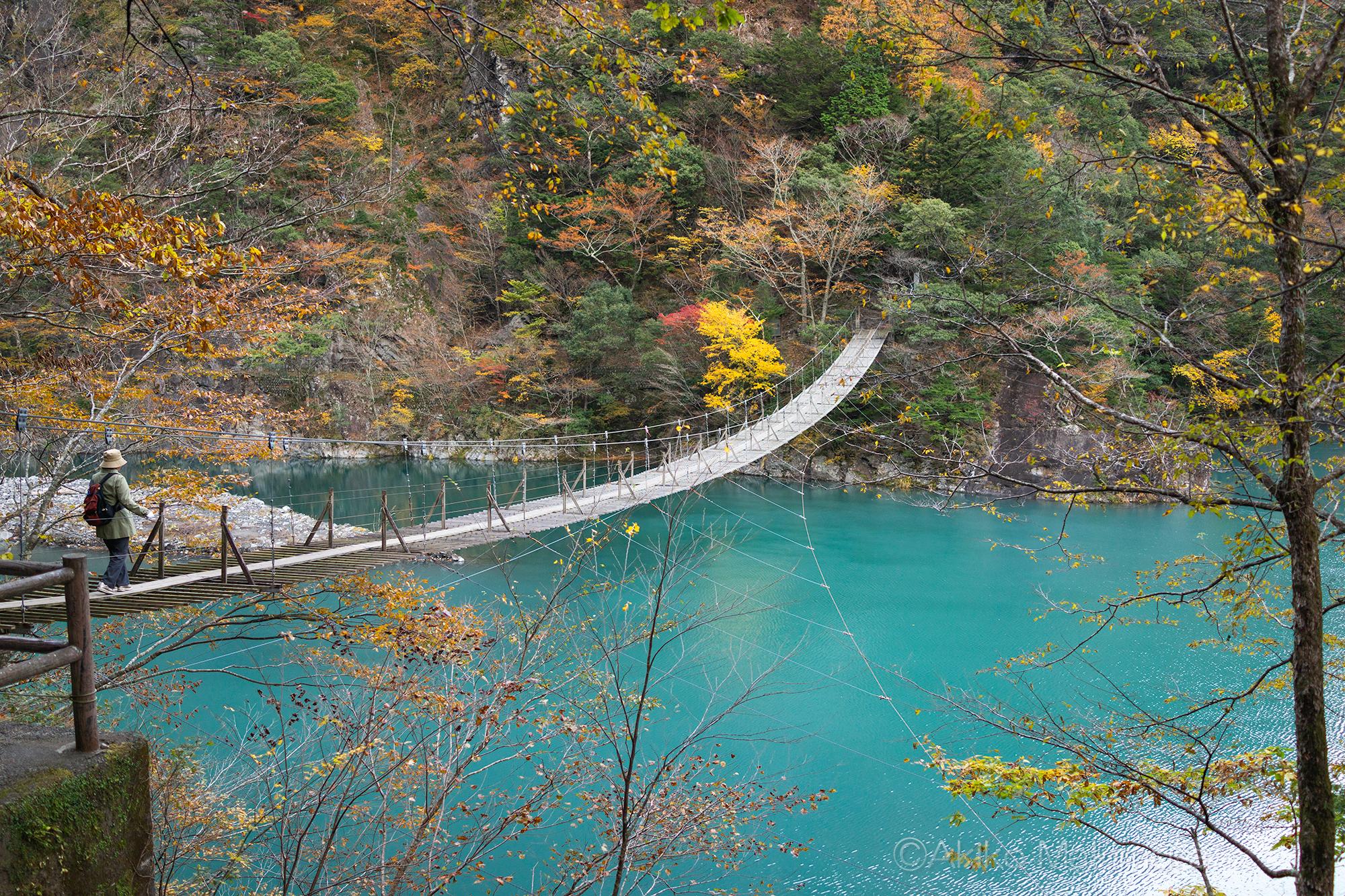 秋深まる寸又峡をゆく 「夢の吊り橋」編